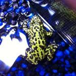 Froggies 01