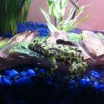 Froggies 05