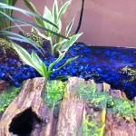 Froggies 06