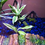 Froggies 09