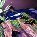 Froggies 10