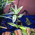 Froggies 11